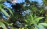 DSC_8136.JPG